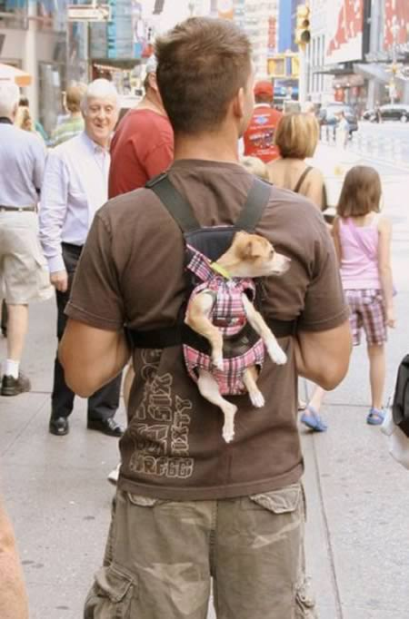 top 10 funny photos of walking a dog