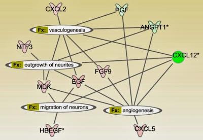Сеть взаимодействий между факторами, которые секретируют мезенхимальные стволовые клетки