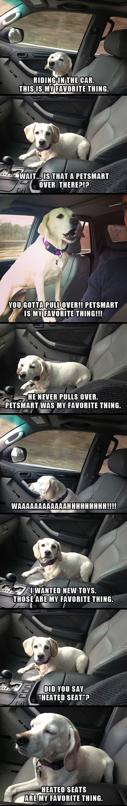cool-puppy-car-seat