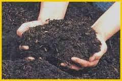 cara membuat pupuk kompos cacing di rumah, cara membuat vermikompos di rumah, cara membuat casting menggunakan sampah dapur