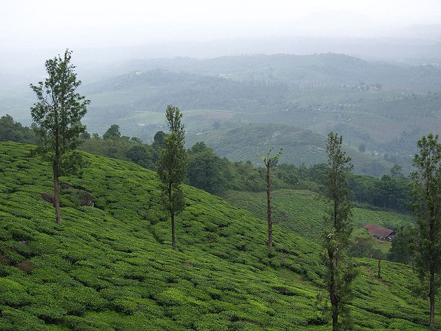 Greenery and hills in Wayanad, Kerala
