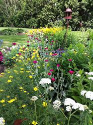 This year's cottage garden