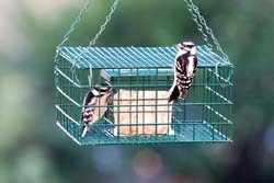 Wild Birds Unlimited Best Starling And Blackbird