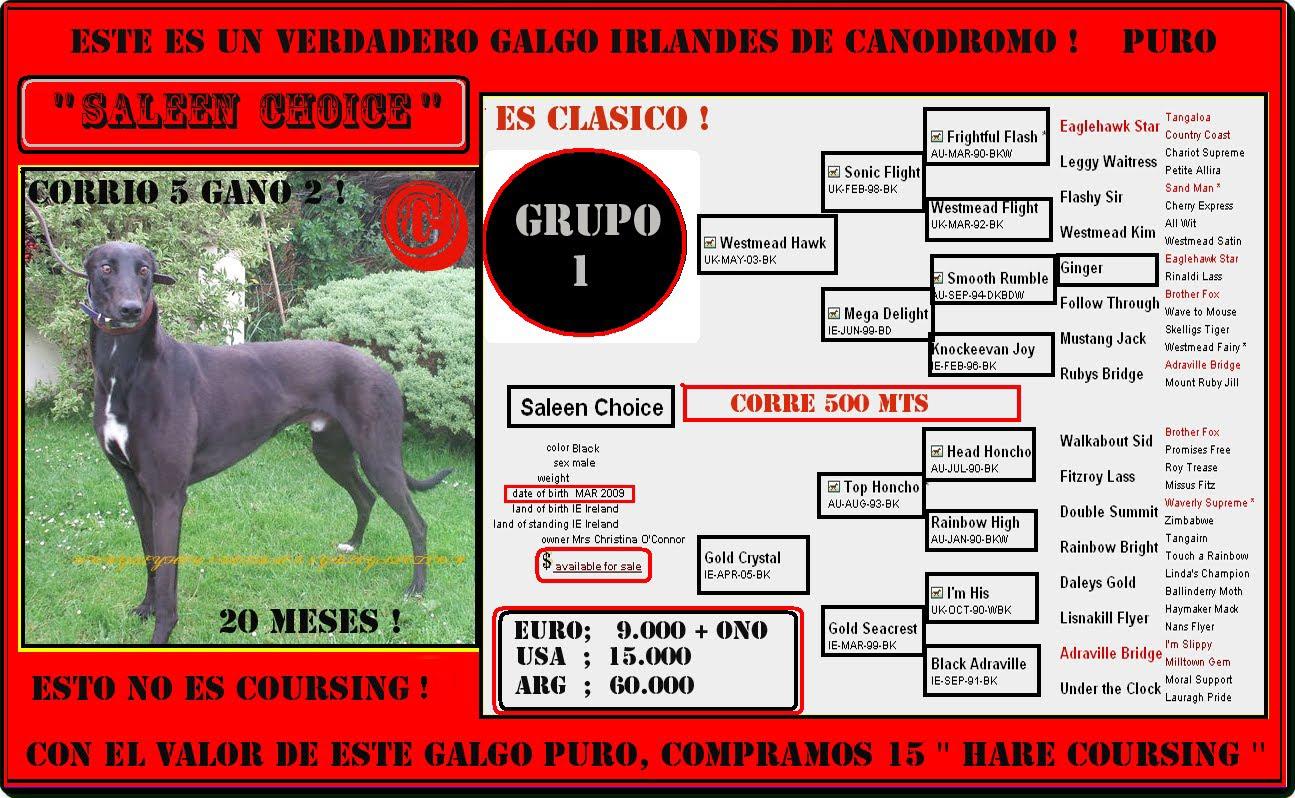 ESTA EN VENTA HOY 24/04/2011, ES GRADO 1, DE CANODROMO , GANO 2 DE 5 CARRERAS!!!