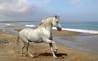 Poze Cai Horses Wallpapers