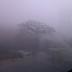 Sejarah Majapahit dan Kabut Abadi di Trowulan