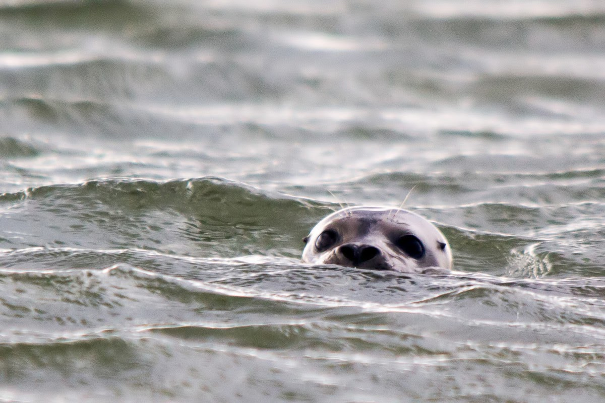 Seal is curious