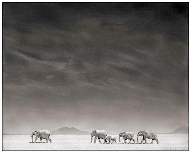 africa, fotografía, paisajes, animales