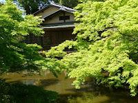 紅葉の新芽が鮮やかな池中亭。