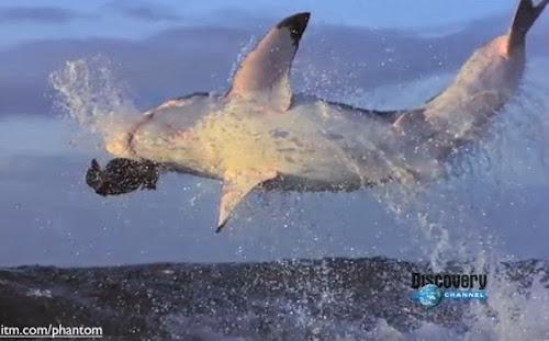 Ataques de tubarão em camera lenta
