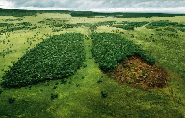 Two forests in the shape of human lungs, with one suffering from deforestation.