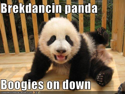 Panda bear funny - photo#6