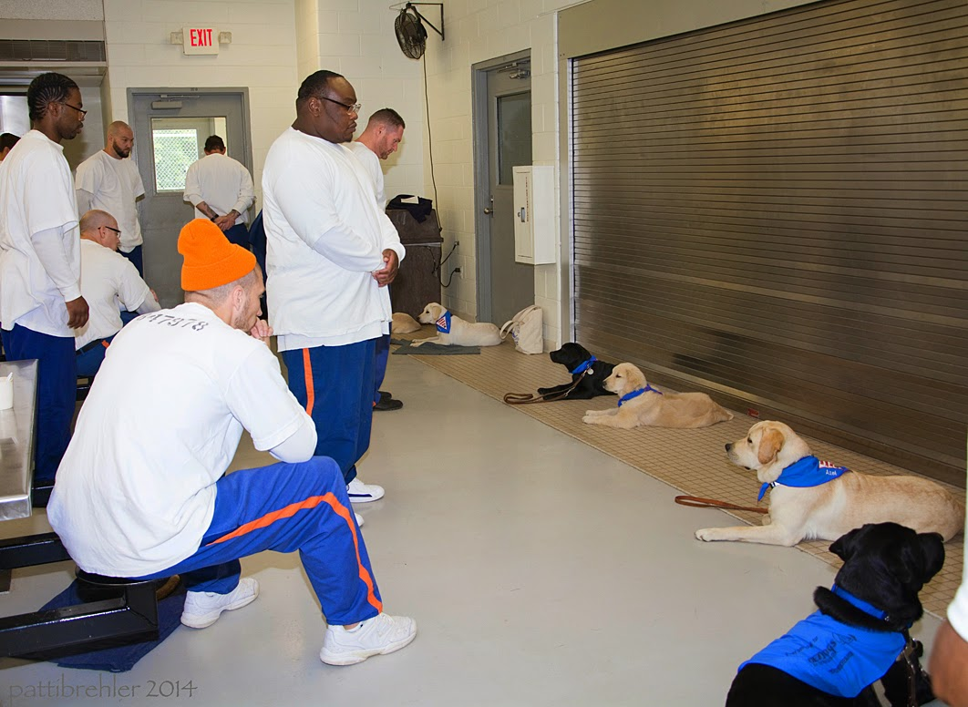 Six puppies are lying down along a wall on the right, all but one are facing left. Opposte the puppies are a line of men dressed in blue prison pants and white t-shirts. The men are sitting or standing and looking at the pups.