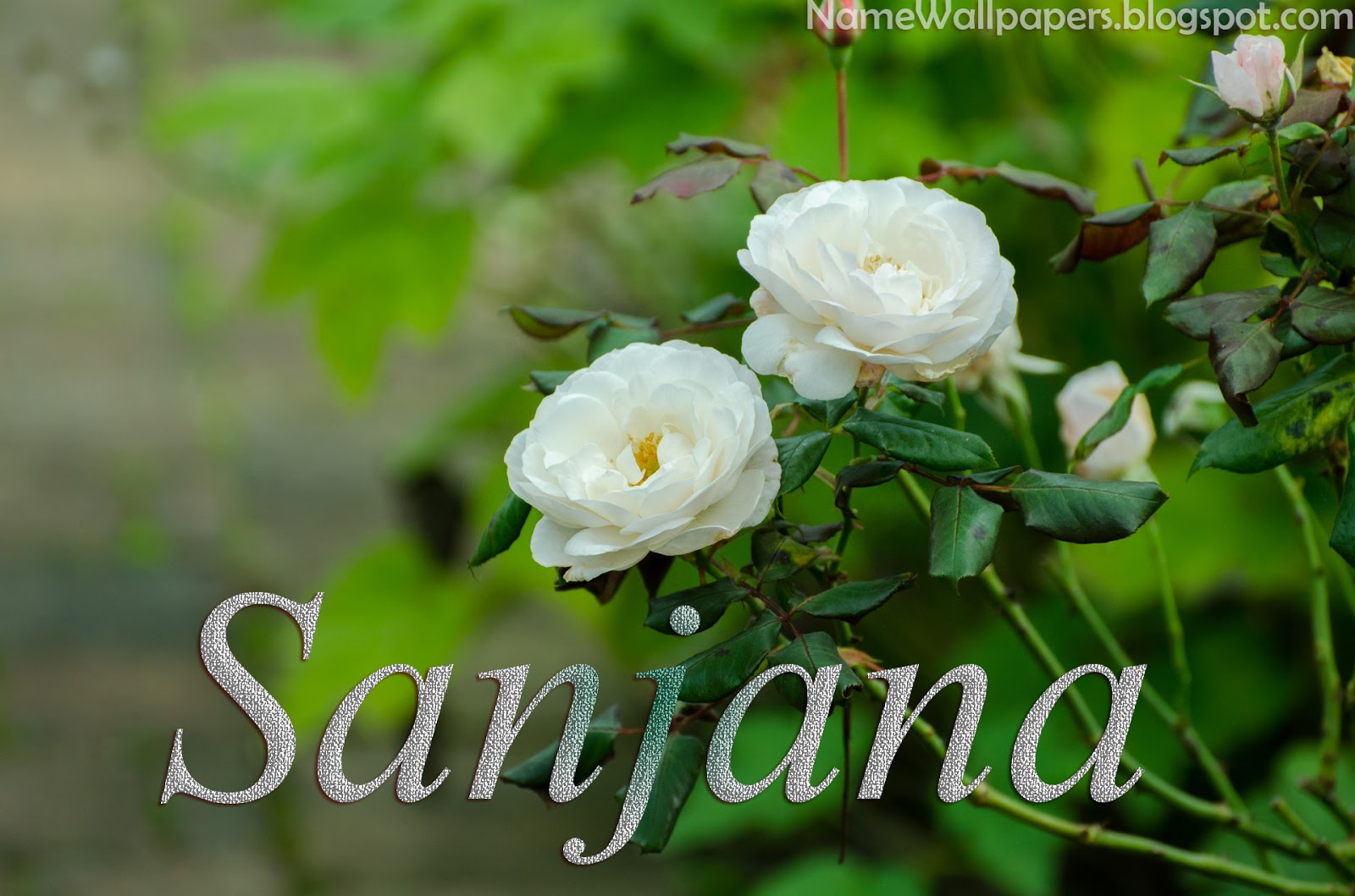 ... Sanjana ~ Name Wallpaper Urdu Name Meaning Name Images Logo Signature