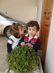 Beijoqueira