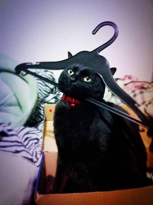 Свежая подборка фото смешные кошки