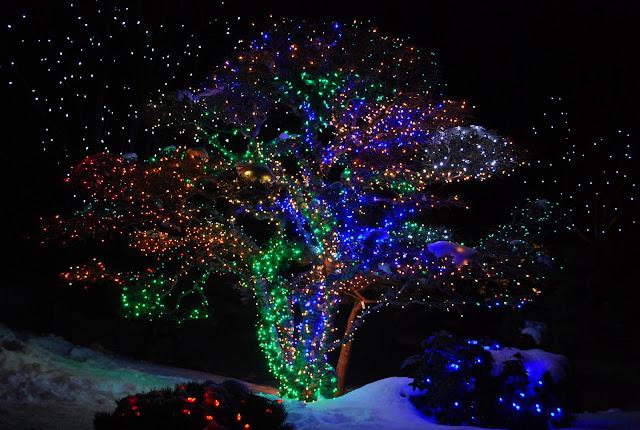Lustgarten 39 S Pancreatic Cancer Research Walk In Denver Denver Holidays Blossoms Of Light With