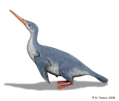 pinguinos de hace 60 millones de años Waimanu
