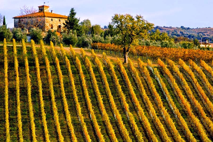 Italian, French and Spanish Wine Makers Meet, Greet & Drink   Thursday May 28th, from 6pm