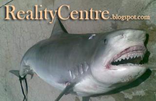 ikan hiu makan manusia