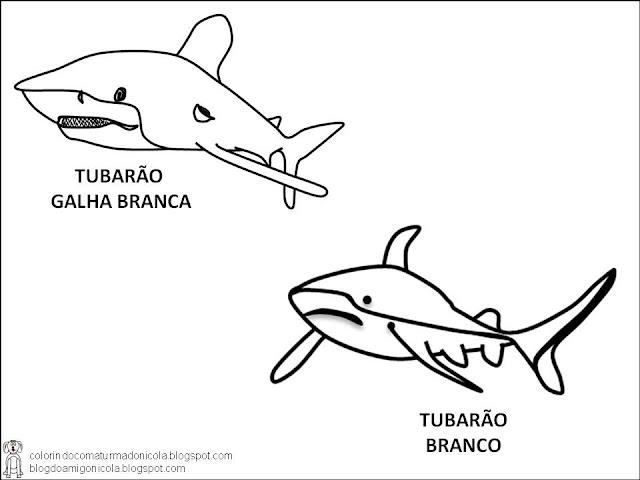 imagens para colorir de tubarão - desenhos de tubarões para imprimir e colorir