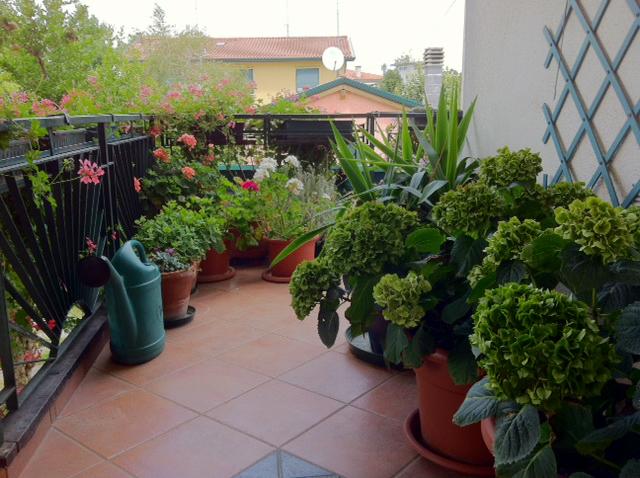 Il piccolo giardino di l il terrazzo della mamma for Piante per terrazzi