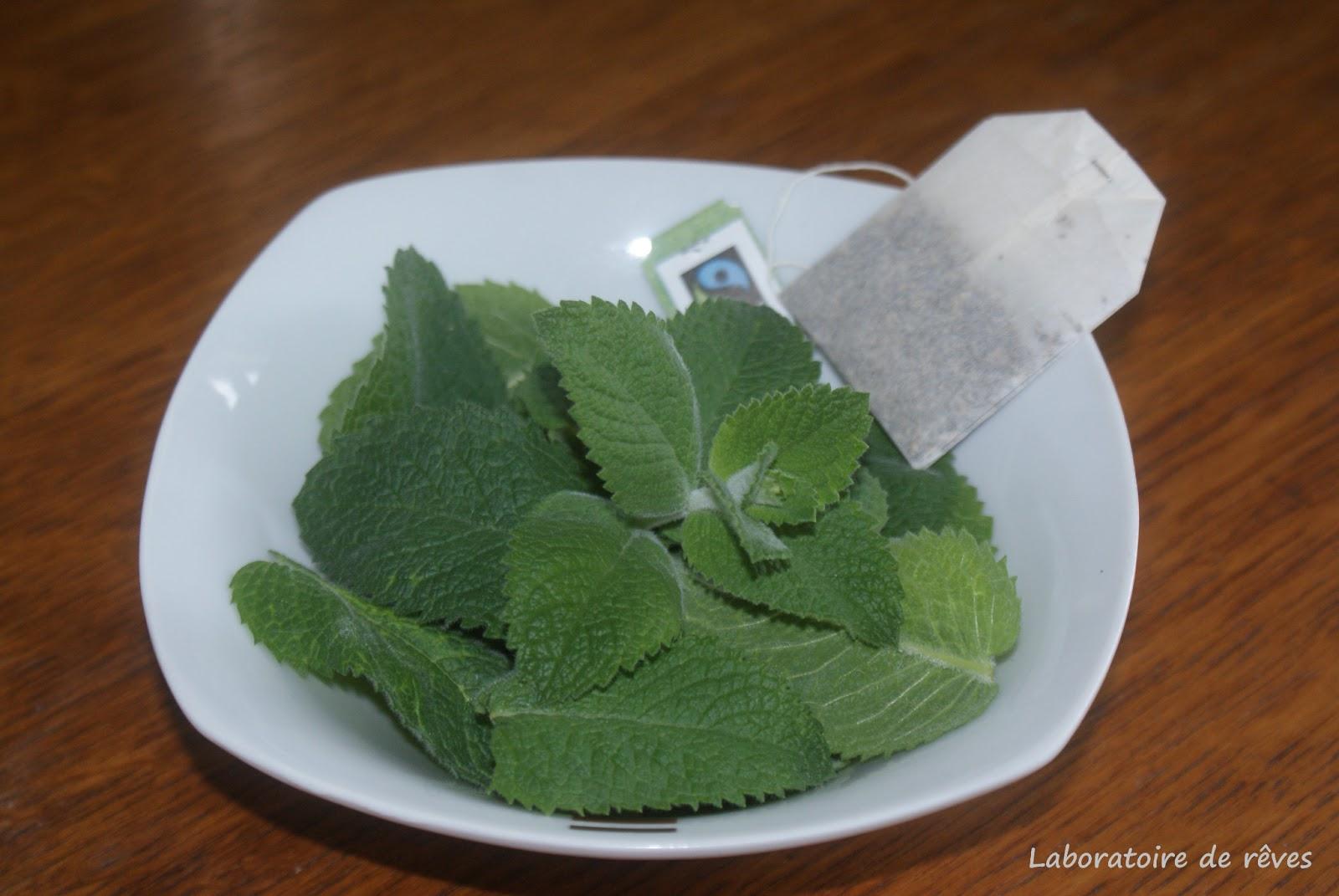 Le laboratoire de r ves th glac la menthe - Faire pousser de la menthe ...