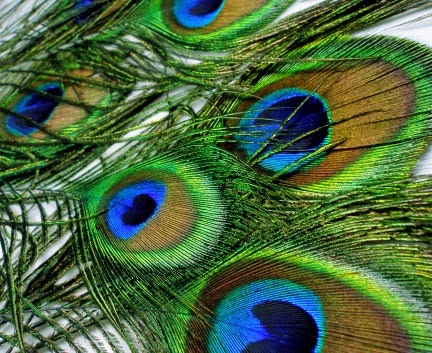 Evolution does not give rise to beauty or features without function. Evolution fails overall anyway. The peacock's tail has beauty without function, and doesn't drag the bird down, either.