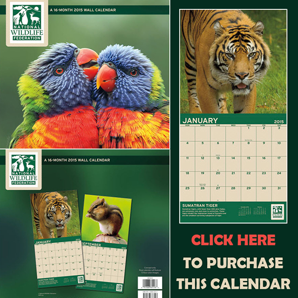 Purchase this Calendar