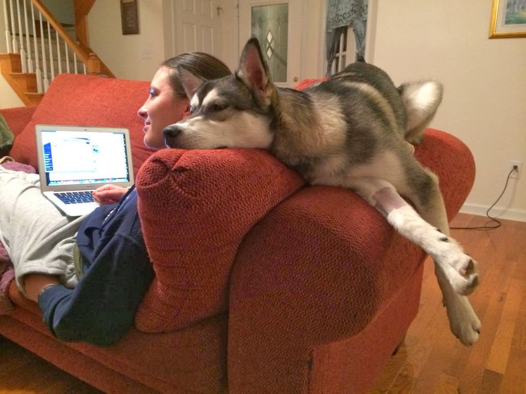 Cute dogs - part 7 (50 pics), husky lays on the couch