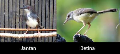 Search Results for: Membedakan Betina Dan Jantan Burung Blak Troat