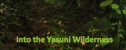 into the Wilderness of the Yasuni