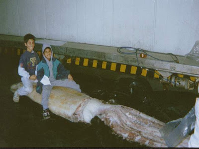 calamares-gigantes-calamar-gigante