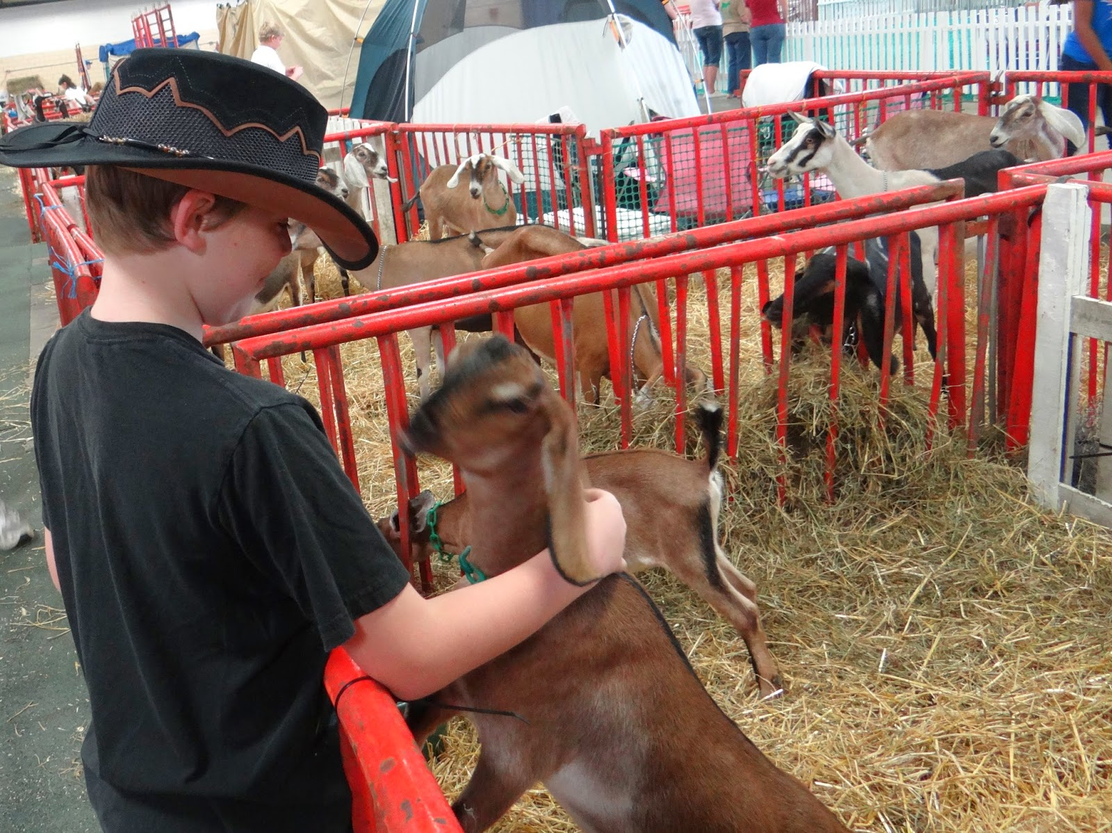 Take a Vacation at Your Local State and County Fairs #Family #Travel