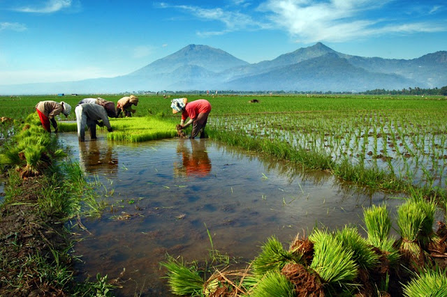 Tips Cegah Penurunan Kualitas Tanah