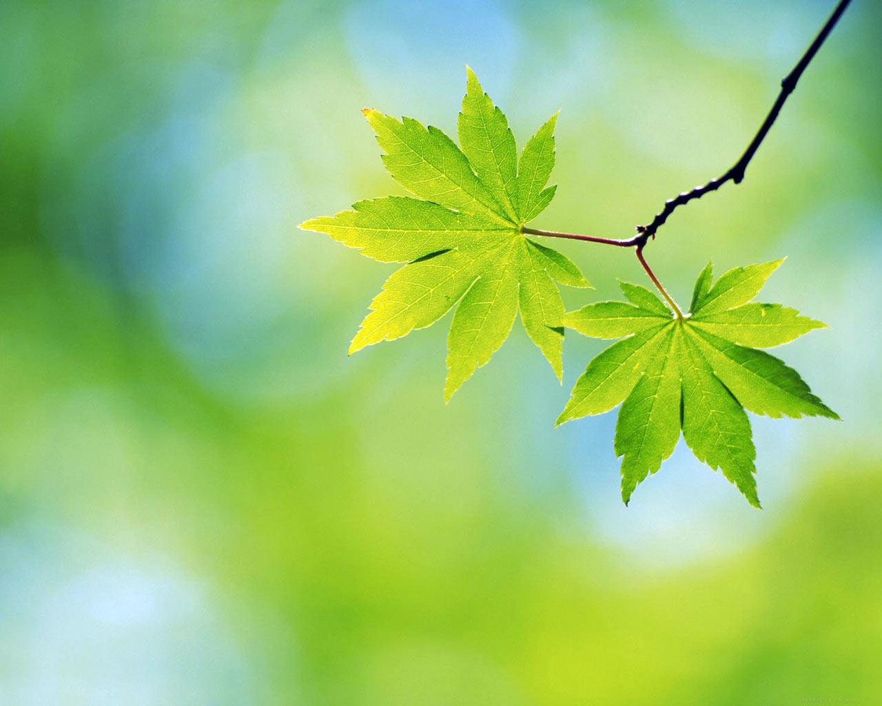 http://1.bp.blogspot.com/-aIxDzIS0rnI/TgrSu7c9WRI/AAAAAAAAFI4/M5JEdWp-Ob4/s1600/spring+nature+pictures-2.jpg