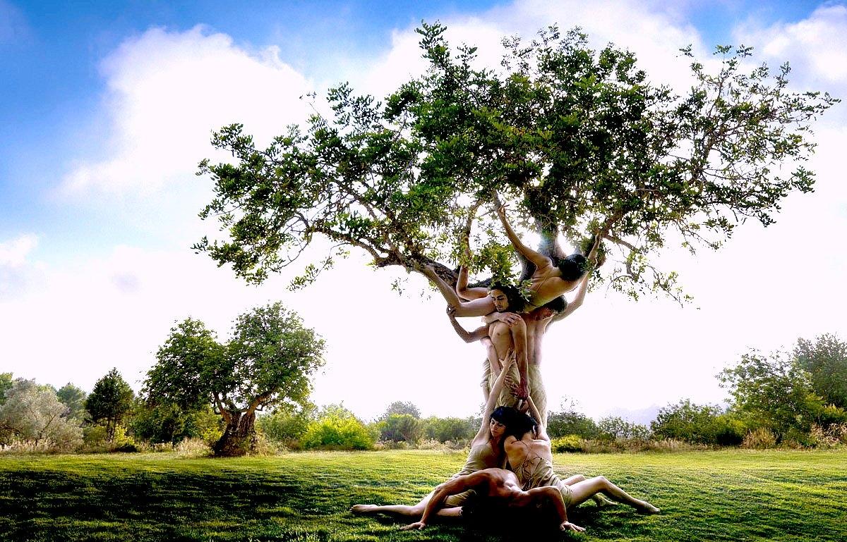Секс с дерево фото 5 фотография