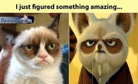 funny grumpy cat sensei