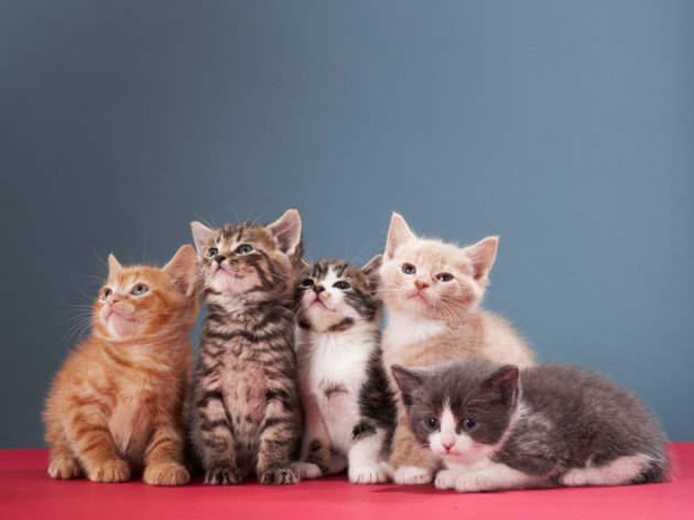 foto kucing lucu langsung saja ini dia beberapa foto kucing lucu