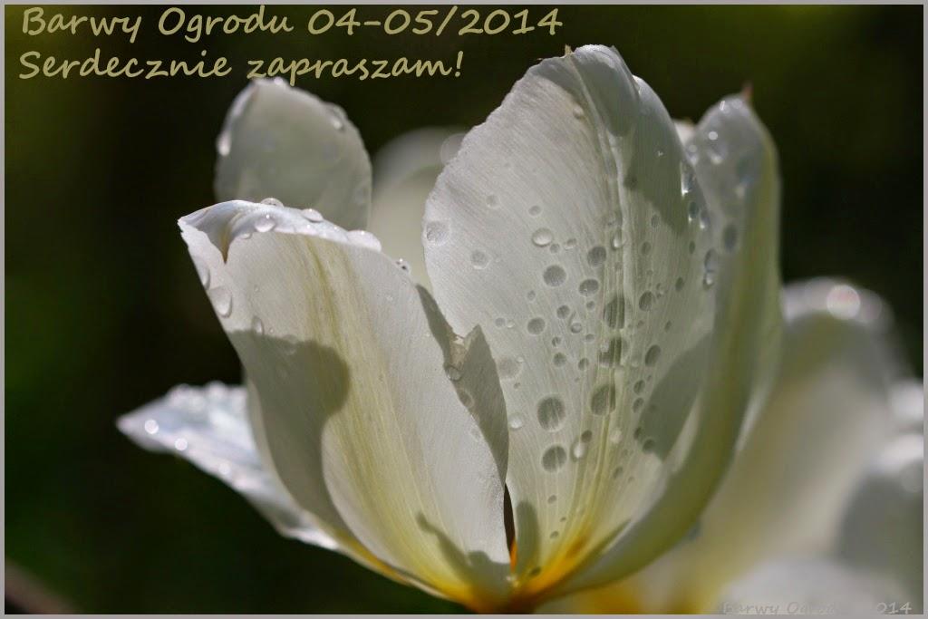 e-magazyn Barwy Ogrodu 04-05/2014