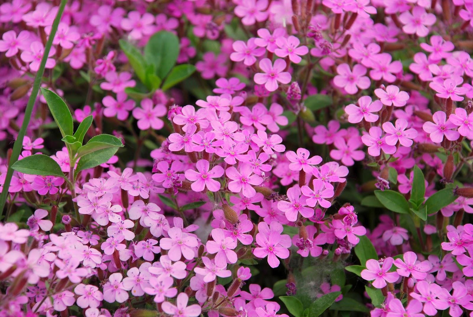 Il mondo in un giardino tre cuscini di fiori - Fiori da giardino primavera estate ...