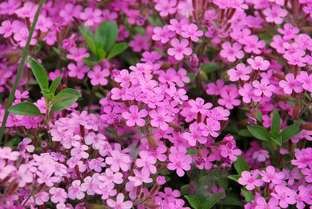 Aiuto per riprogettare un 39 aiuola forum giardinaggio for Fiori per giardino perenni