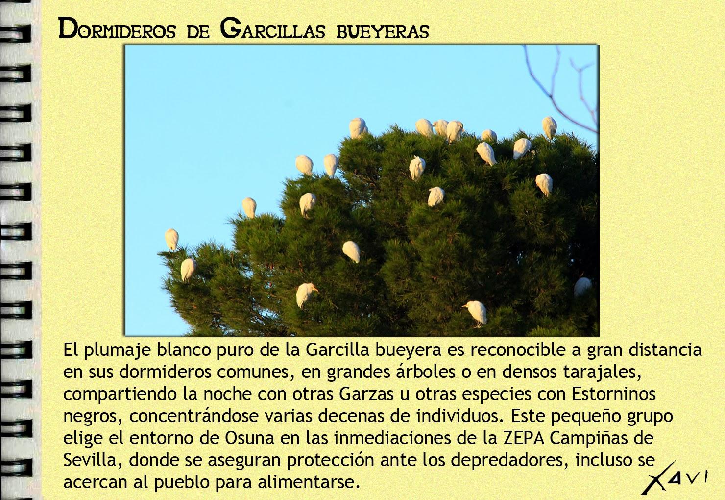 ZEPA Campiñas de Sevilla