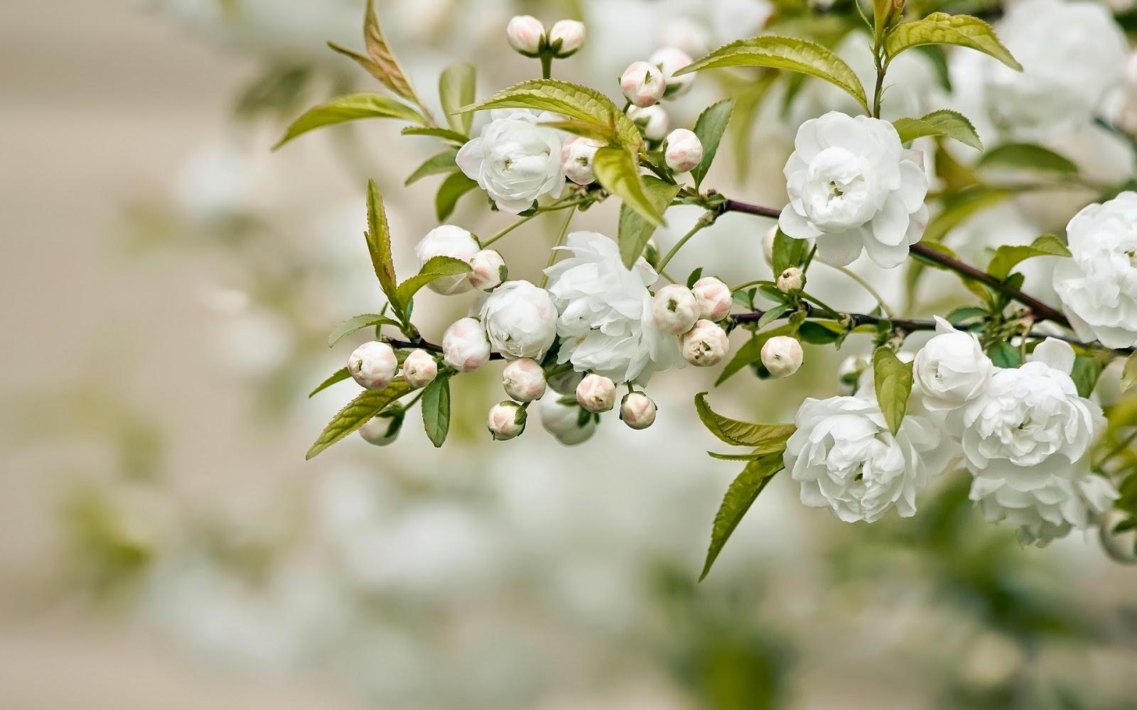 Imagenes de Amor, Flores Blancas, parte 7