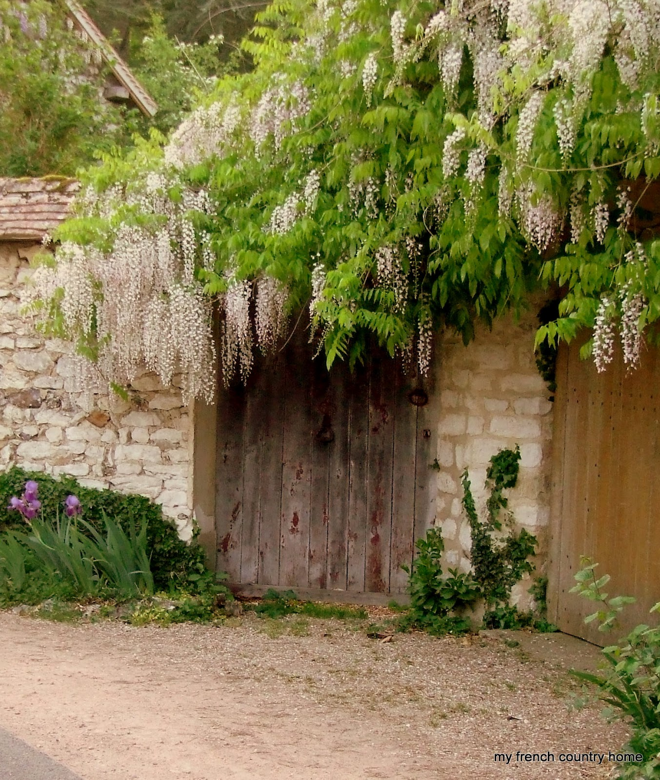 Home decor and garden are very famous in the world for The wisteria