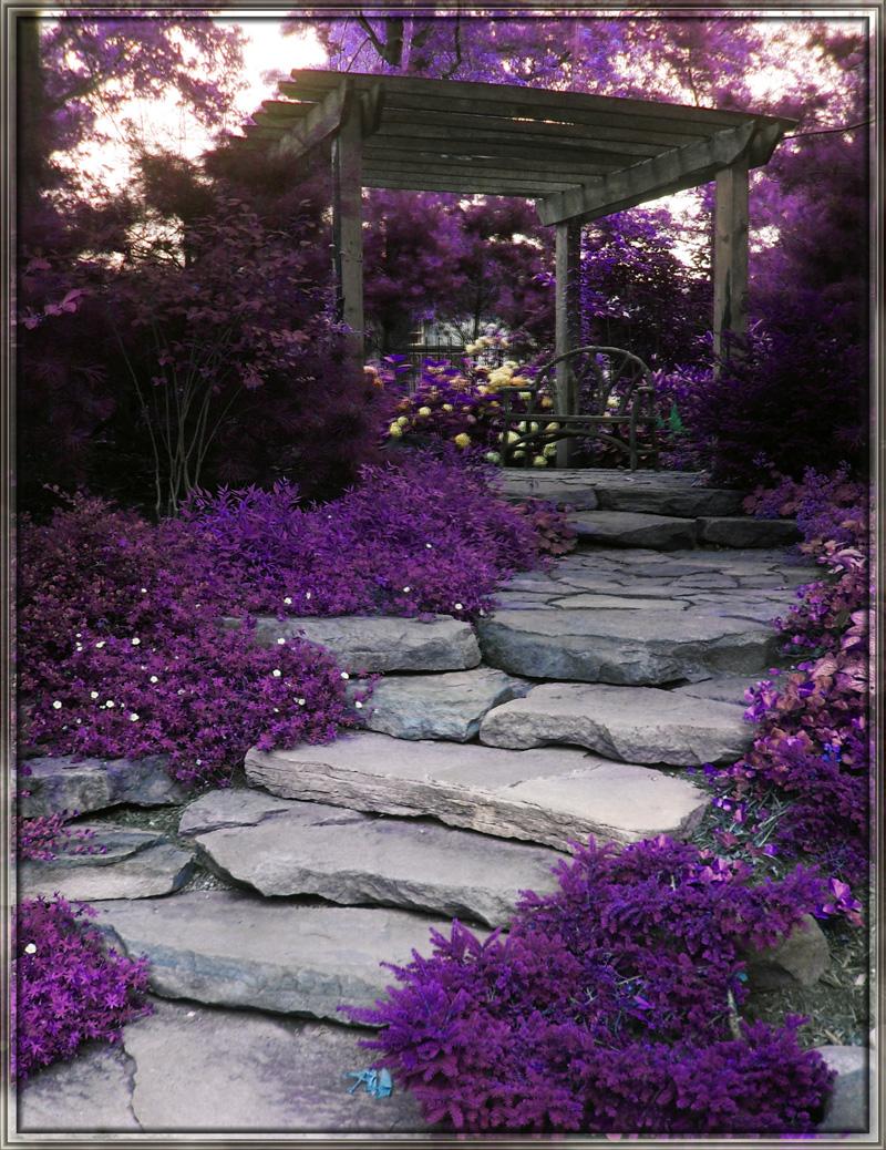 Rituals beauty naturally beautiful purple for Beautiful garden plants