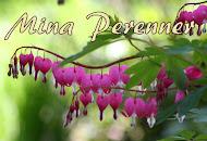 Perennerna Vilka/Hur/Varför