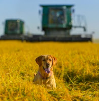 New photos- Cabela the Rice Farm Dog