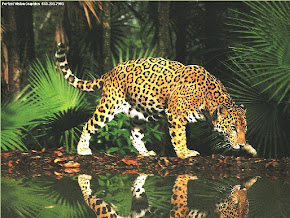 Jaguar ~ Chapter 3