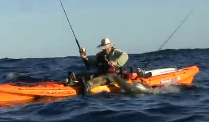 Shark Attack News Video New Zealand Kayak Fisherman